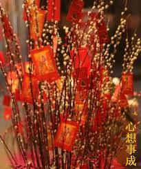chinese new year home decoration pussy willow is a favourite flower for chinese new year stalks of