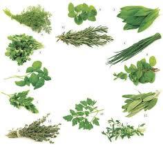 mf daily best indoor herbs for your garden