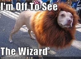 Funny Halloween Animal Costumes 135 Halloween Dogs Images Animals