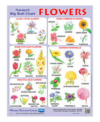 buy navneet flowers big wall chart online in india u2022 kheliya toys