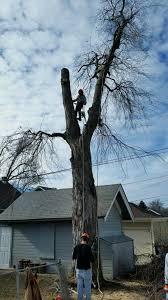 omaha tree removal service omaha nebraska