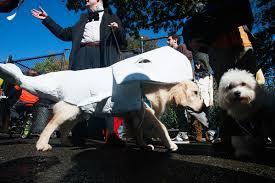 boxer puppy halloween costumes happy halloween from adbiblio the top 15 literary pet costumes
