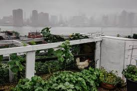 Urban Gardening New York Raise The Roof Urban Farms Expand Up In And Around National