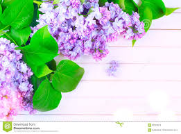 Lilac Flower by Lilac Flowers Bunch On White Planks Wood Background Stock Photo