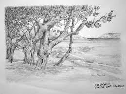 sea grape tree yvonne pecor mucci