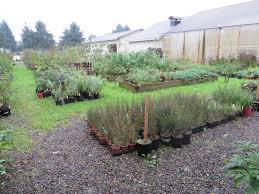 native plants for sale chickadee gardens nursery visit scappoose bay watershed nursery