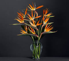 Free Vase Birds Of Paradise Haute Couture With Free Vase Giftsmate