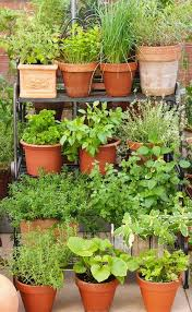 the 25 best garden pots ideas on pinterest planter ideas