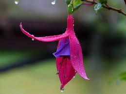 purple flower free picture purple flower tree