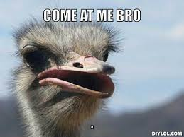 Ostrich Meme - ostrich face meme generator diy lol cute pinterest