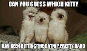 Meme Kitty - whoa check out that kitty smile imgflip