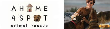 australian shepherd rescue las vegas rescuegroup u2013 adoption list a home 4 spot animal rescue las