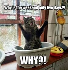 Funny Cat Meme - funny cat meme meme funny cat memes and cat