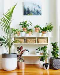 Interior Garden Plants by How To Create An Affordable Indoor Garden