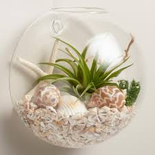 Wall Mount Planter by Wall Mounted Live Plant Glass Terrarium Live Plants Starfish