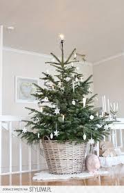 best 25 real xmas trees ideas on pinterest xmas trees