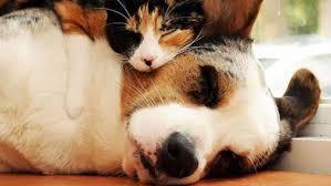alimentazione casalinga gatto l alimentazione casalinga per cani e gatti obiettivo benessere
