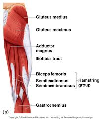 Anatomy Of Body Muscles Muscle Anatomy