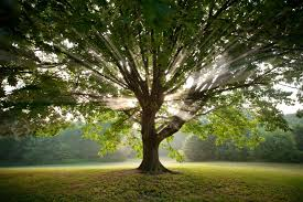 poetry friday think like a tree reading to the