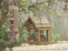 building a backyard bird sanctuary urban sacred garden