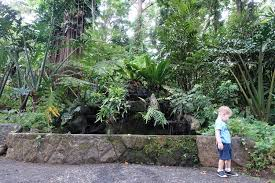 Up Los Banos Botanical Garden Mount Makiling Botanical Gardens Nature Trail A Momma Abroad