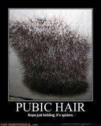 gray pubic hairs pubic hair very demotivational demotivational posters very