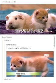 Cat Memes Tumblr - awesome tumblr 1234 by annie boismenu meme center