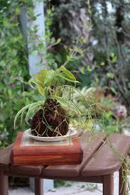 vegetable gardening for beginners with deana bess naples