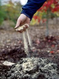 how to prepare a vegetable garden site hgtv