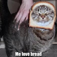 Cat Breading Meme - cat breading meme guy