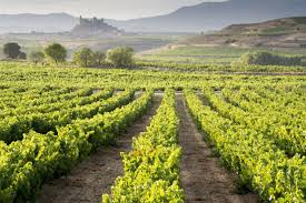 Spanish Flag Vine The Spanish Holiday That Will Make You A Wine Connoisseur