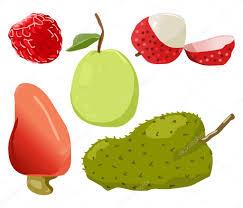 lychee fruit drawing guava agathis lalillardieri raspberry lychee soursop u2014 stock