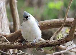 bird friendly native plants audubon grow these native plants so your backyard birds can feast audubon