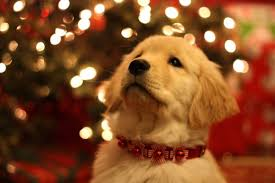 dog christmas before you give a dog a home for christmas read this