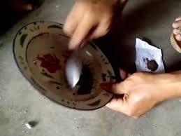 Obat Kapsul Cacing Tanah obat typhus tradisional dari cacing goreng
