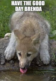 Insanity Wolf Meme - baby insanity wolf meme generator mne vse pohuj