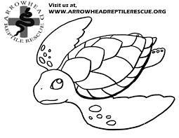 arrowhead reptile rescue