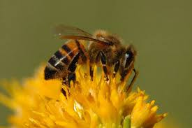 Flowers Bees Pollinate - top 30 flowers for bees u2013 realfarmacy com
