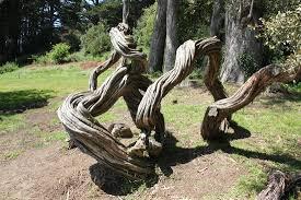 unique trees picture of golden gate park san francisco