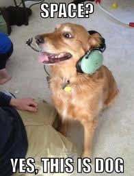 Hilarious Dog Memes - funny dog memes 13