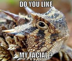 Horny Toad Meme - 162 best tcu images on pinterest frogs purple reign and bedroom