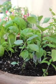 Herb Grower S Cheat Sheet 2284 Best Garden Ideas And Plans Images On Pinterest Garden