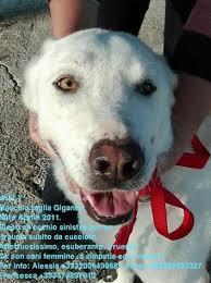 cani in cerca di casa splendidi cani in cerca di casa urgente annunci