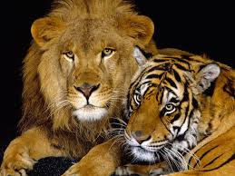 new free animal wallpaper picture new images download