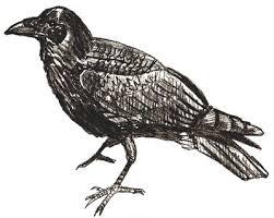 draw crow draw step step