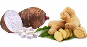 Is Ginger Root A Vegetable - taro plaster to get rid of cysts and fibroma juicing for health