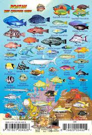 Roatan Map Roatan Bay Islands Honduras Reef Creatures Guide Franko Maps