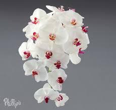 wedding flowers orchids wedding flowers orchids