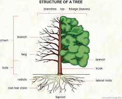 tree visual dictionary