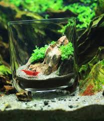 Best Substrate For Aquascaping 169 Best Aquascaping Nano Aquariums Images On Pinterest